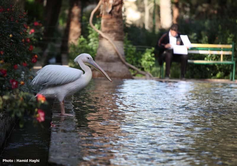باغ گلشن - اردیبهشت 90